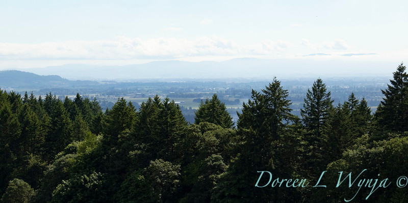Domaine Serene grounds_1055.jpg