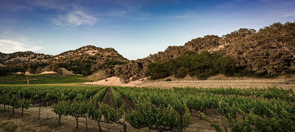 Just Another Beautiful Vineyard