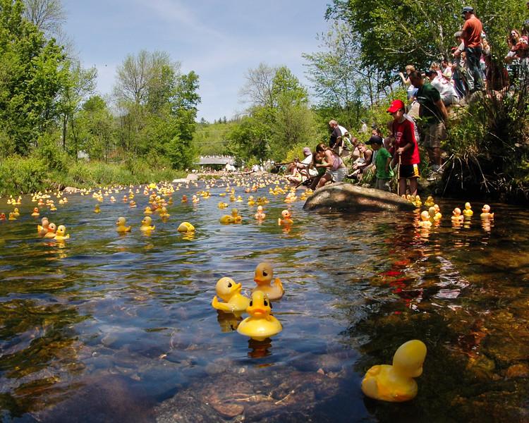Wildquack Race, Wildcat River, Jackson, NH (#038)