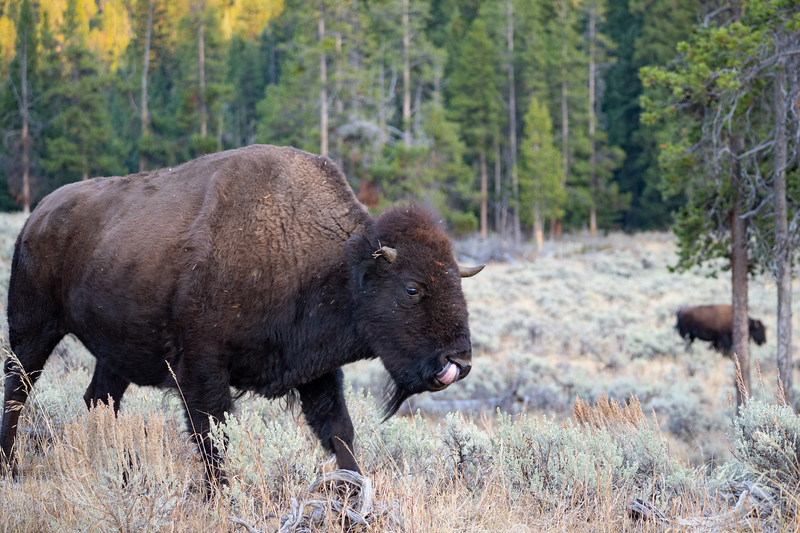 Yellowstone-86.jpg