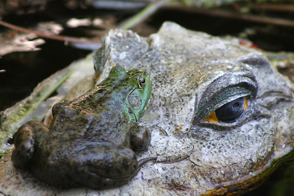 Frogs and Toads etc