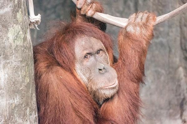 Mammals at Birmingham Zoo