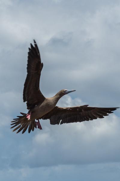 Galapagos-Best-187.jpg