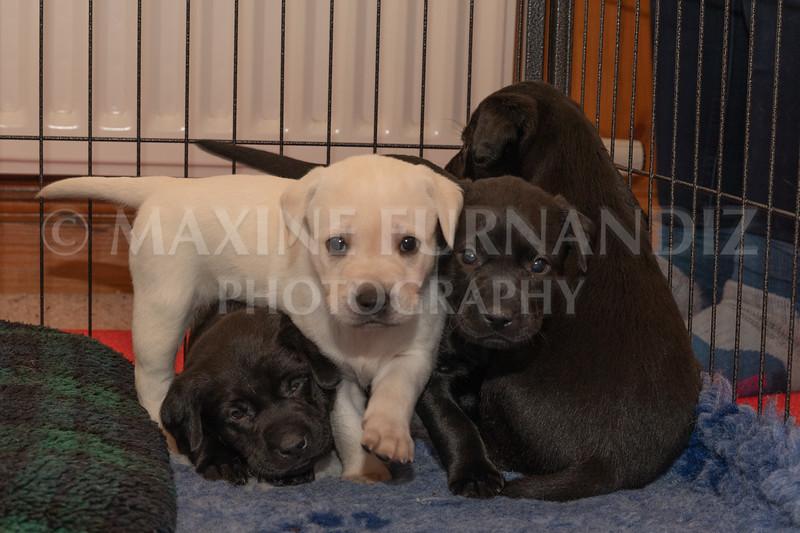 Weika Puppies 2 Mar 2019-8460.jpg