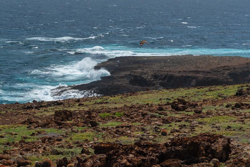 Aruba-354.jpg