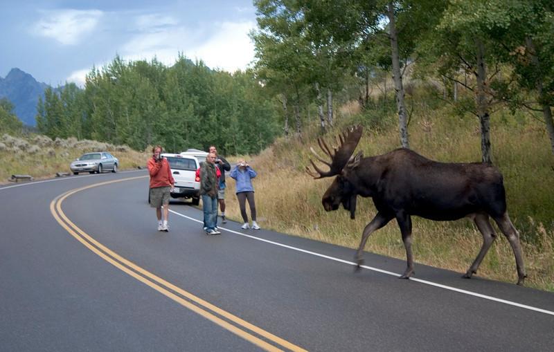 moose-people.jpg