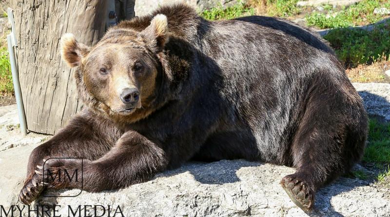 Bjørneparken2017-54.jpg