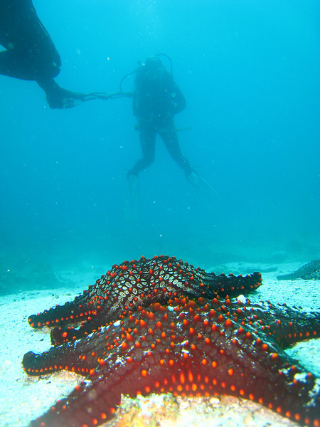 Diving in the Galapagos (149 of 392)