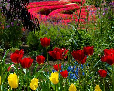Flora and Landscapes