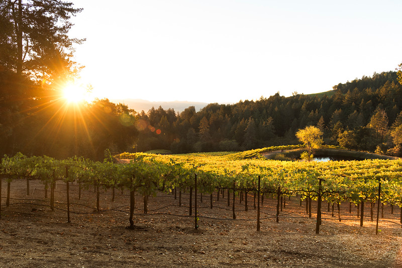 Napa Vineyard Sunrise Light - 2048px-.jpg