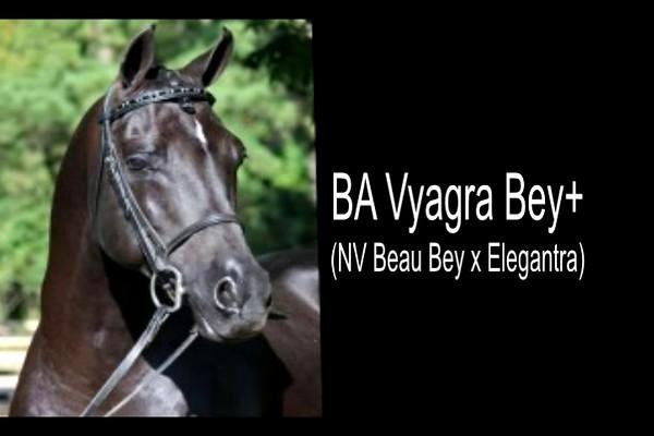 BA Vyagra Bey+