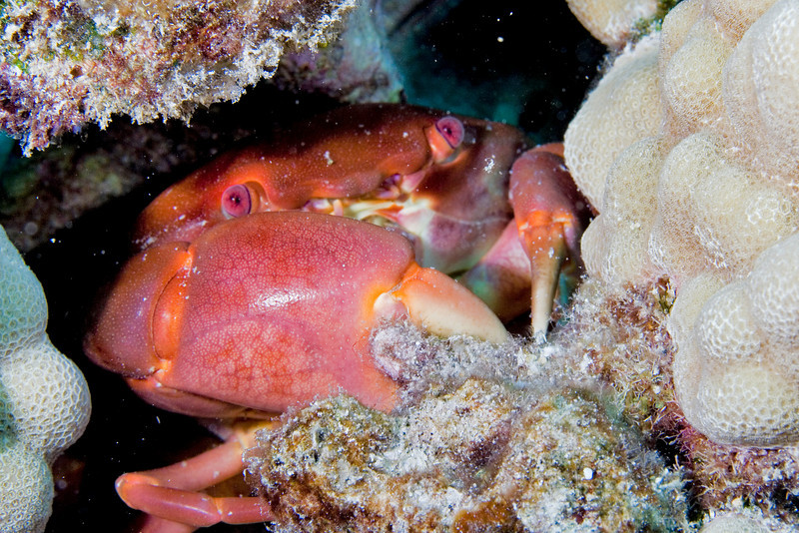Convex Crab.jpg