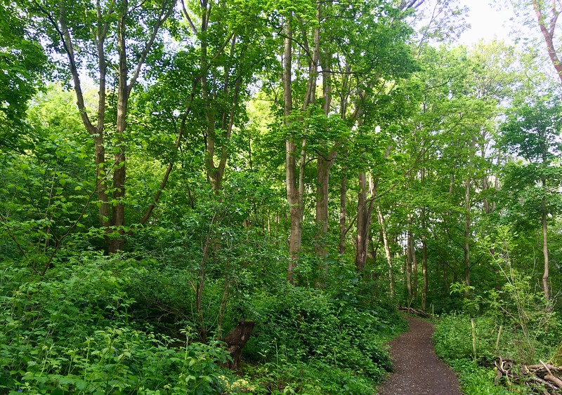 Coney Woods on a bright spring morning