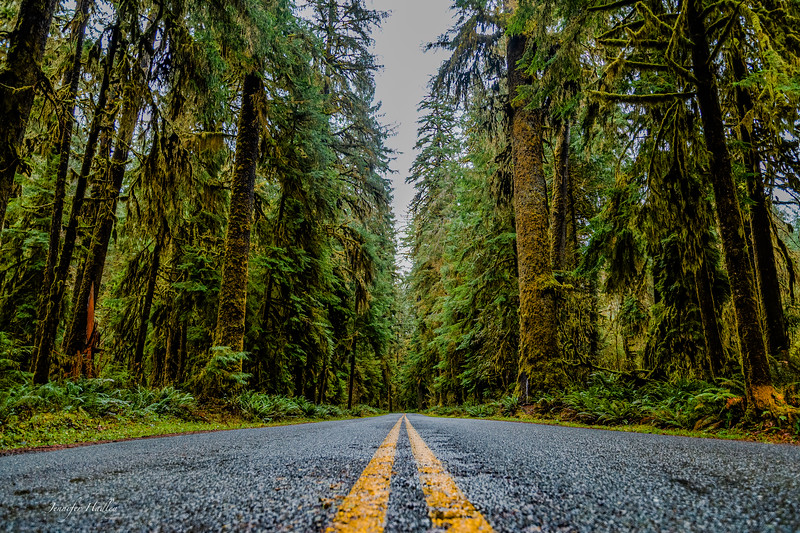 Hoh Rainforest Road.jpg