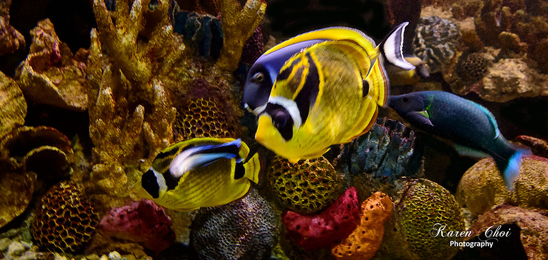 Fish Panoramic sm.jpg
