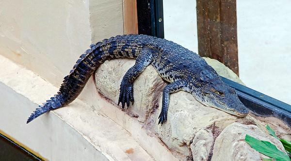 Crocodiles of the World Zoo