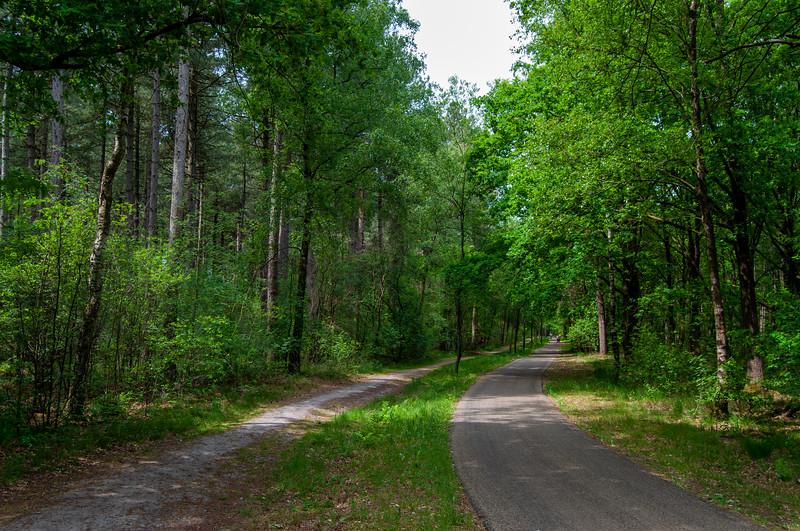 Nationaal Park Hoge Kempen - Duinengordel, omgeving Donderslag 25.jpg