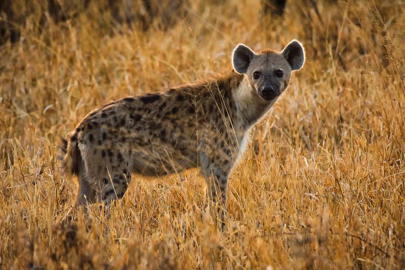 Tanzania-safari-15.jpg