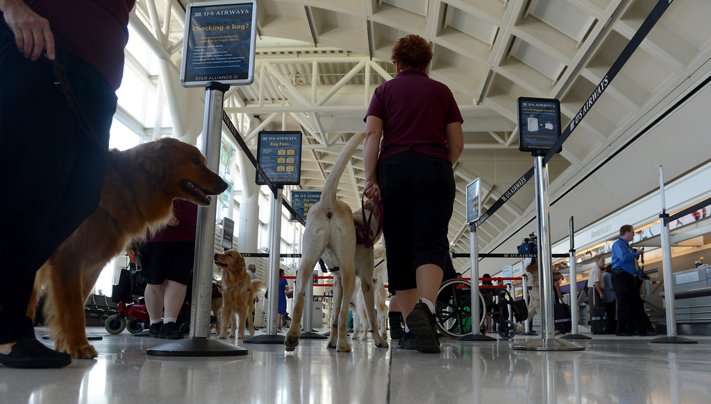 . Service dogs get a feel for the airport as they work with their handlers and the TSA at LA/ONT International Airport in Ontario, CA Thursday, September 12, 2013. (Jennifer Cappuccio Maher/Inland Valley Daily Bulletin)