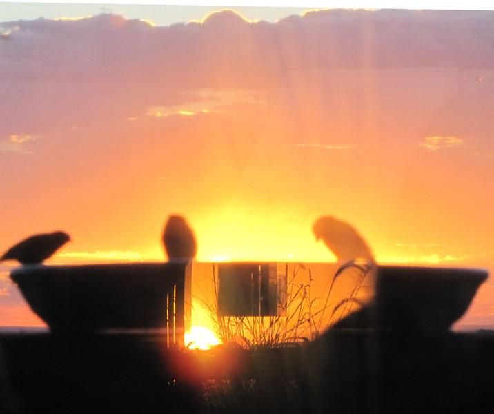 birds (147).jpg