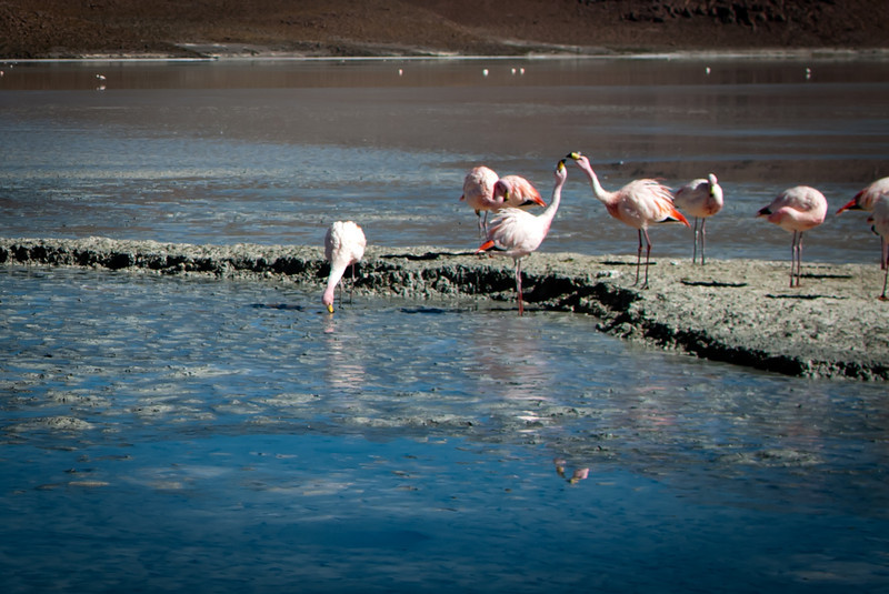 Tupiza to Uyuni 20120530 (102).jpg