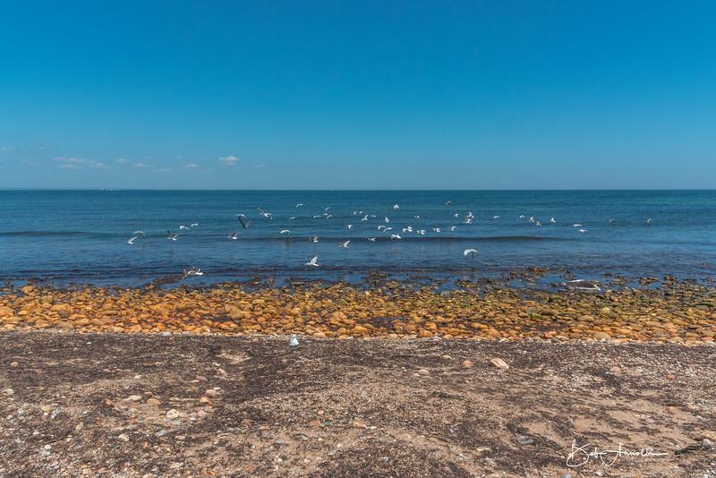 Block Island-44.jpg