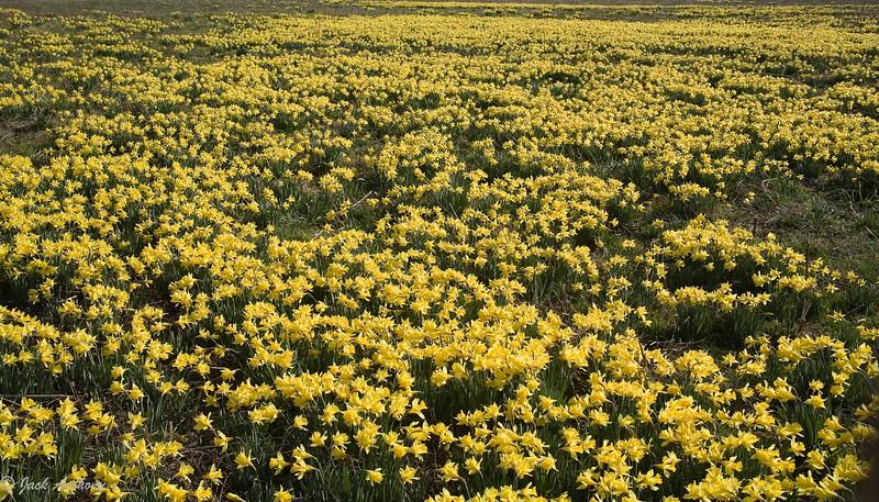 20060303-flower field_0350.jpg