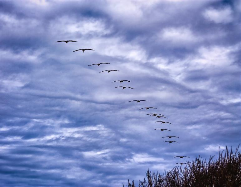 Gulls, Año Nuevo State Park, California, 2010