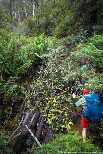 The fun stuff! Scrubby creek