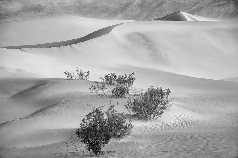 Dunes Too