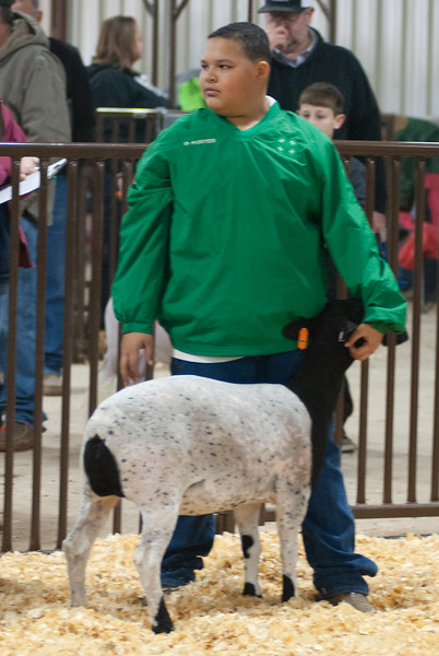 kay_county_showdown_sheep_20191207-32.jpg