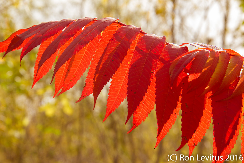 Fall Colors-1.jpg