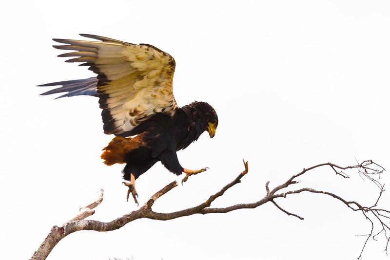Bateleur Landing