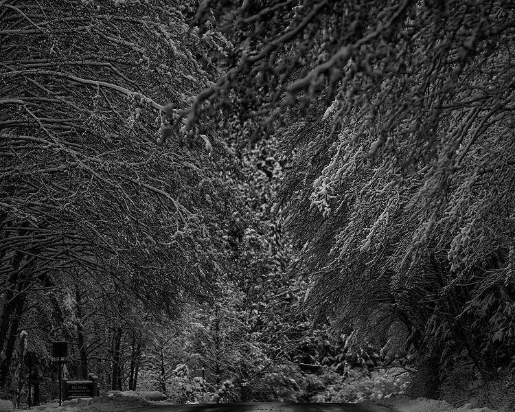 Frag Alder Snow.JPG
