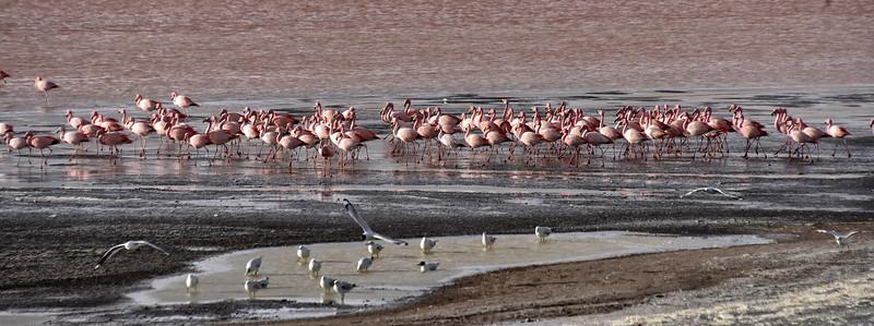 BOL_2569-Flamingos.jpg