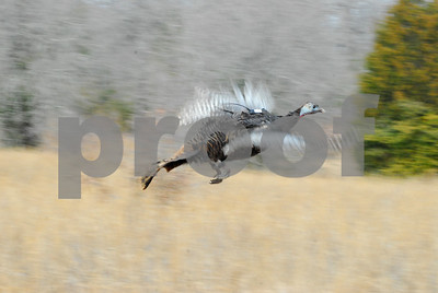 smith-county-nwtf-banquet-friday-to-help-turkey-quail-in-texas