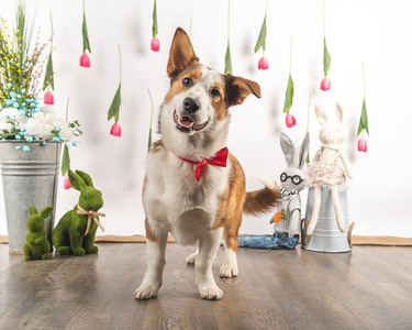 Masters N Dogs 14th Anniversary Spring Photos
