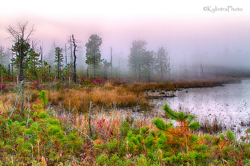 pine barrens-49a_HDR.jpg