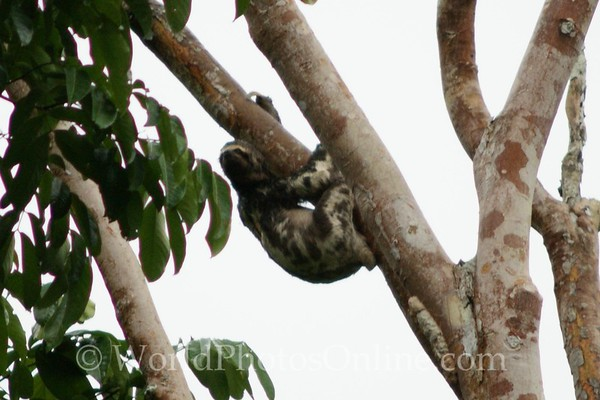 Amazon River &  Pacaya-Samiria National Reserve