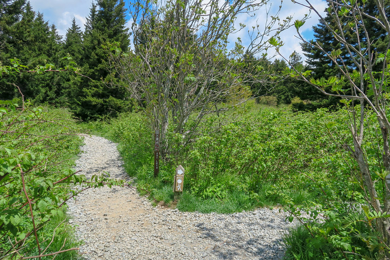 Mountains-to-Sea/Art Loeb Trail North Junction -- 5,900'