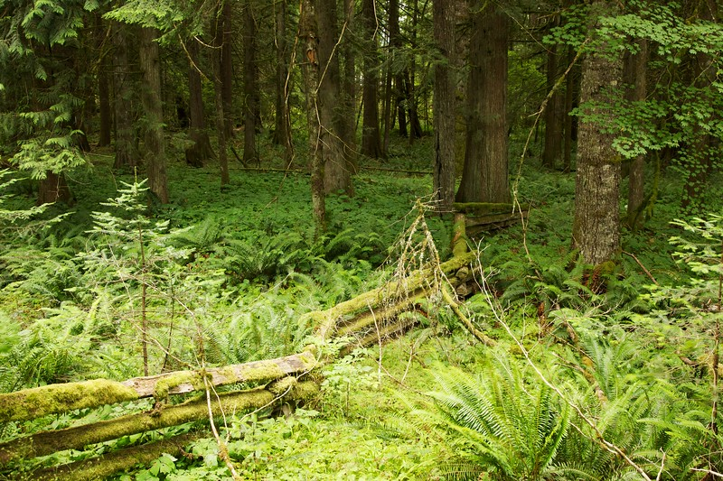 Split rail fence marking park boundary. Longmire, Mt Rainier National Park, Washington.