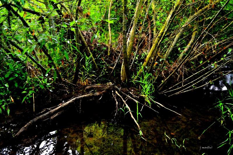 jungle 7-16-2012.psd