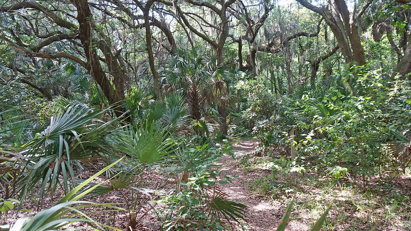 Oak canopy over trail