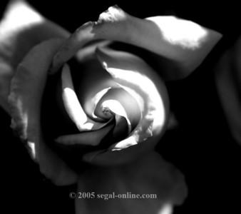Black & White, Sepia