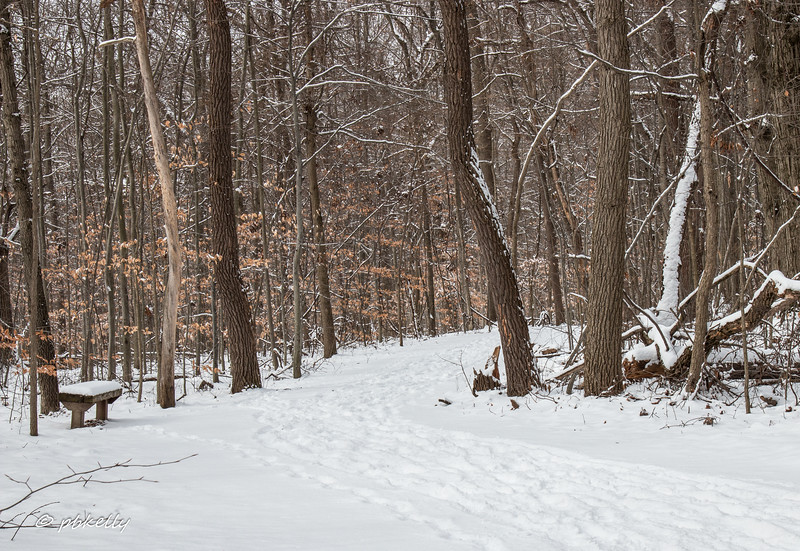 snowy bench 013017.jpg