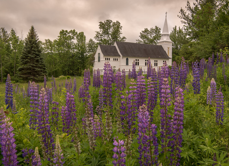St. Matthews and the Lupines