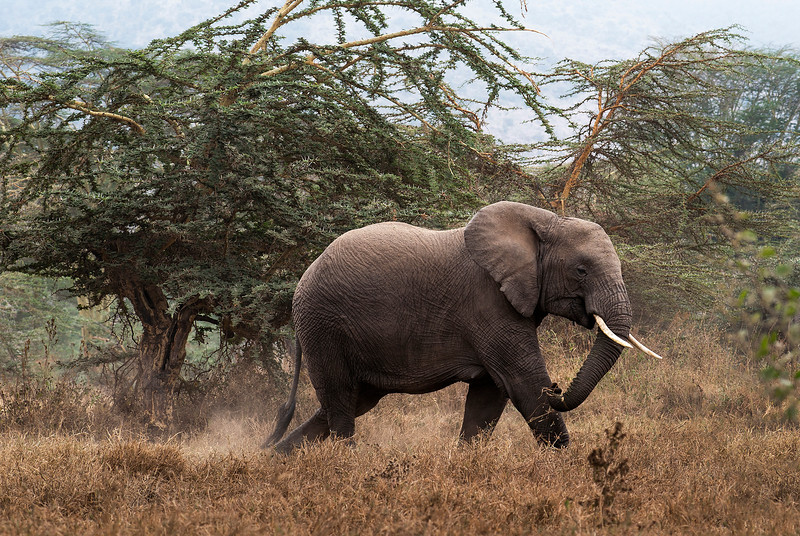 Tarangire national park.  Tanzania, 2019.