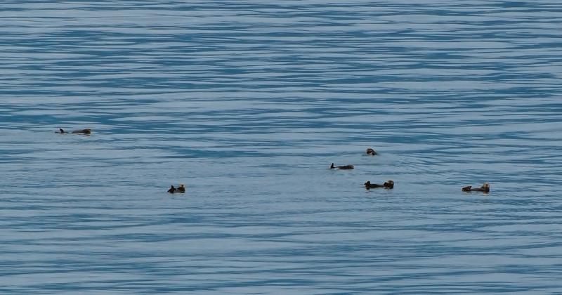 raft of otters.jpg