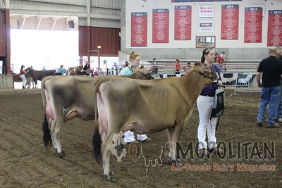 WI Jr State Fair Jersey Show16