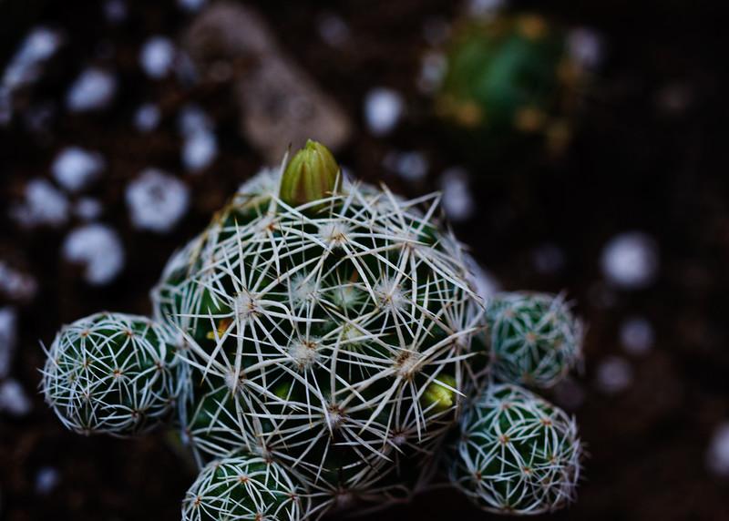 cactus 111219-7026.jpg